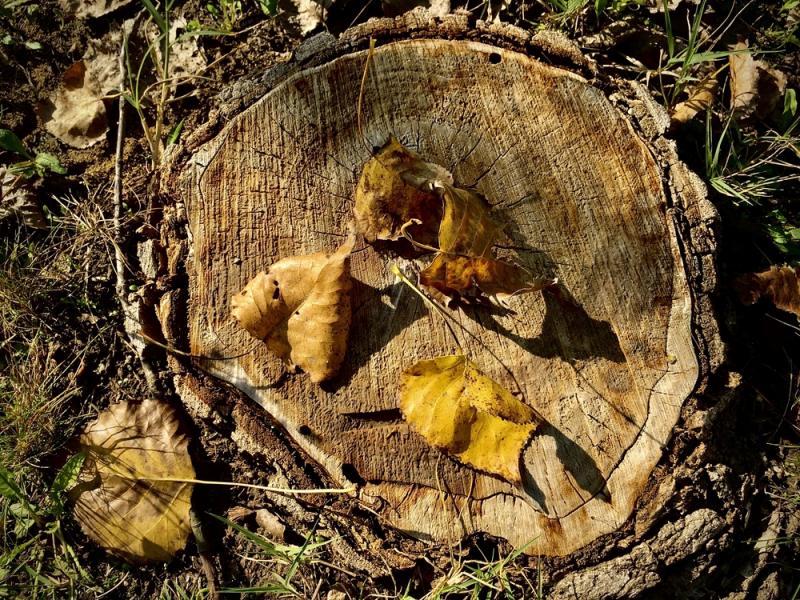 Tüskevári ősz 2020