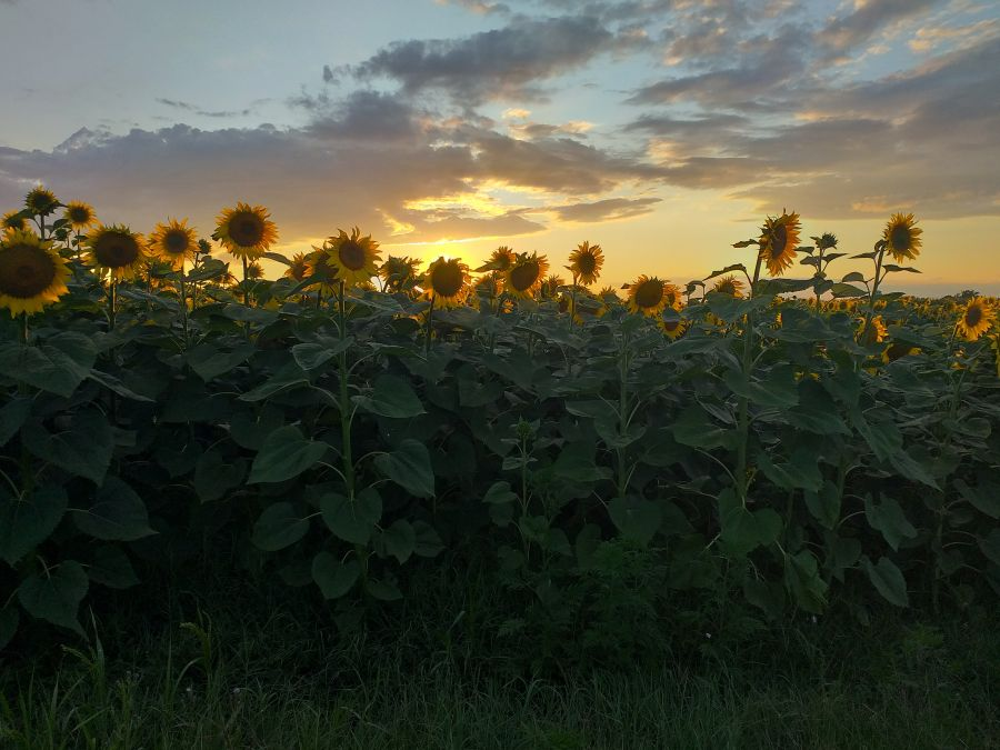 Varázslatos naplemente