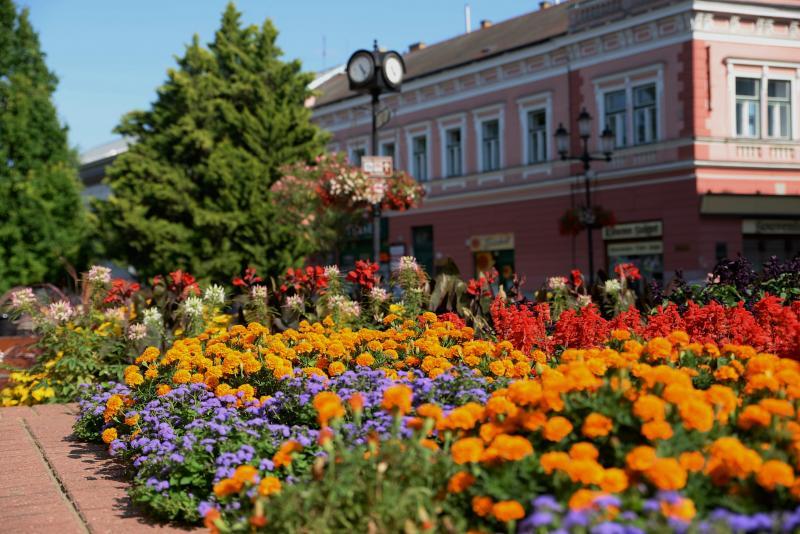 Városunk tavaszi virágai - válogatás fotóarchívumunkból