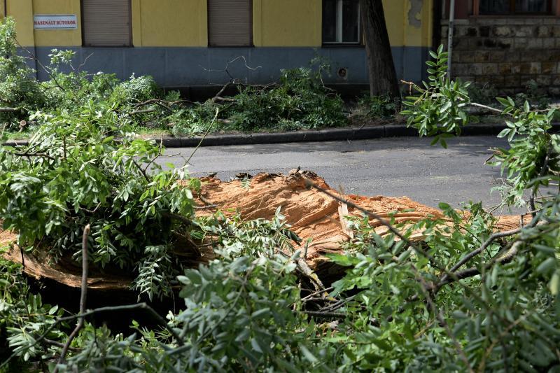 Viharkár eltakarítás a  Szent István utcán