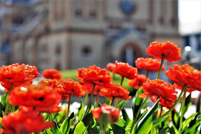 Virágba borult a város