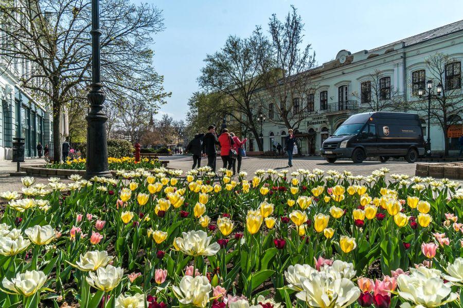 Virágos belváros