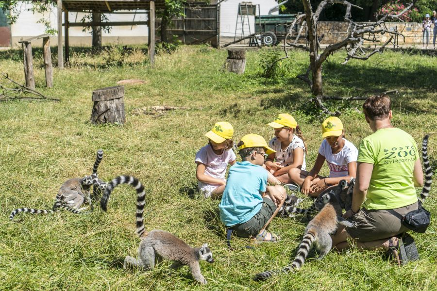 Zoo-Suli pillanatok