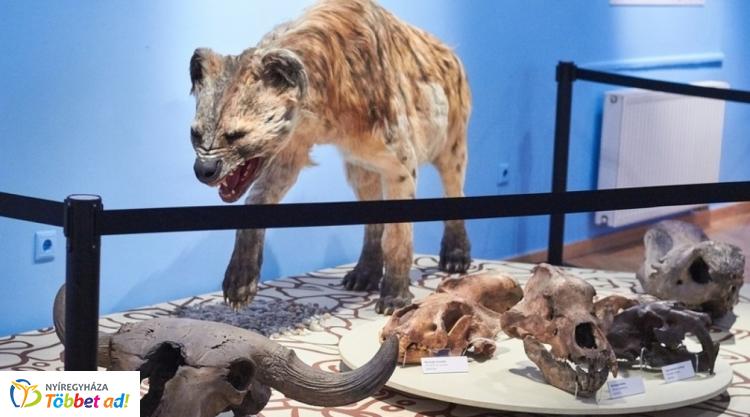 Állatábrázolások az őskőkorban - előadás a Jósa András Múzeumban