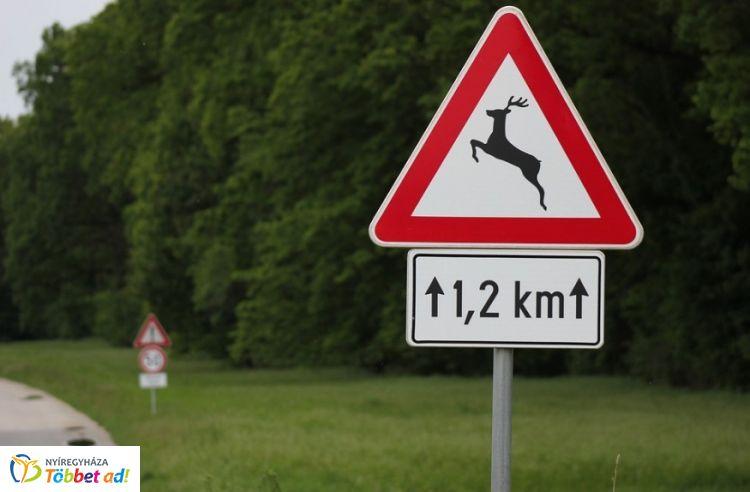 VADGEO alkalmazás –  Hatékonyabb és gyorsabb intézkedés a vadbaleseteket követően