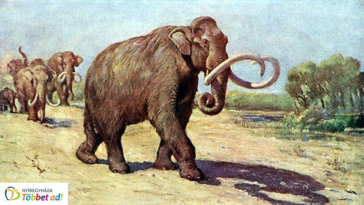 Múzeumi mamutfogó családi expedíció - a Jósa András Múzeumban