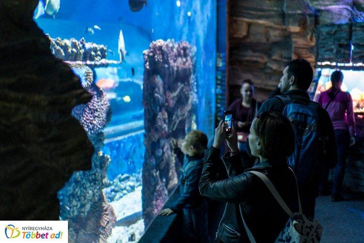 Varázslatos! Félmillió liternyi tengervízben élnek az állatpark akváriumának élőlényei