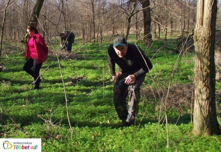 Csillagvirág-számlálás a Sóstói-erdőben – Minden érdeklődőt várnak március 23-án!