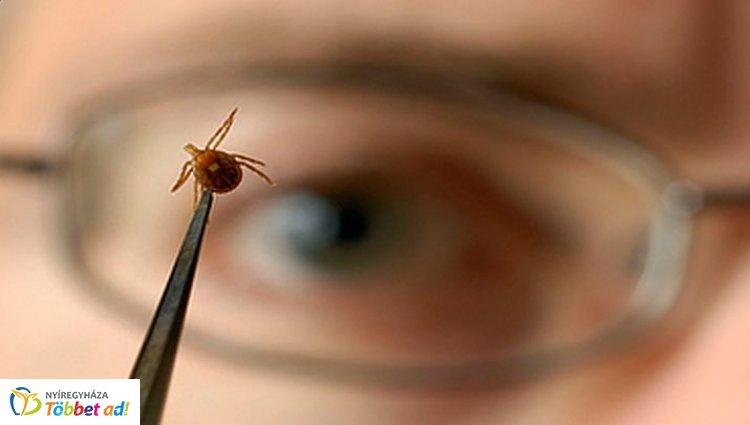 Elkezdődött a kullancsszezon - az apró paraziták súlyos betegségek okozói lehetnek