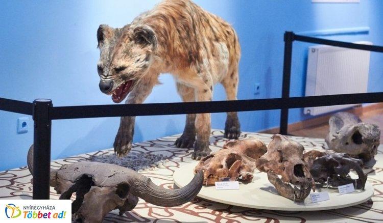 A Magyar Természettudományi Múzeum vándorkiállítása Nyíregyházán is népszerű!