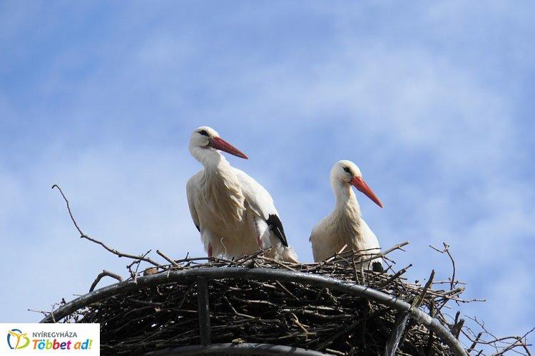 Több mint négyezer fészektartóval várja az E.ON a gólyákat – Érkeznek a költözőmadarak