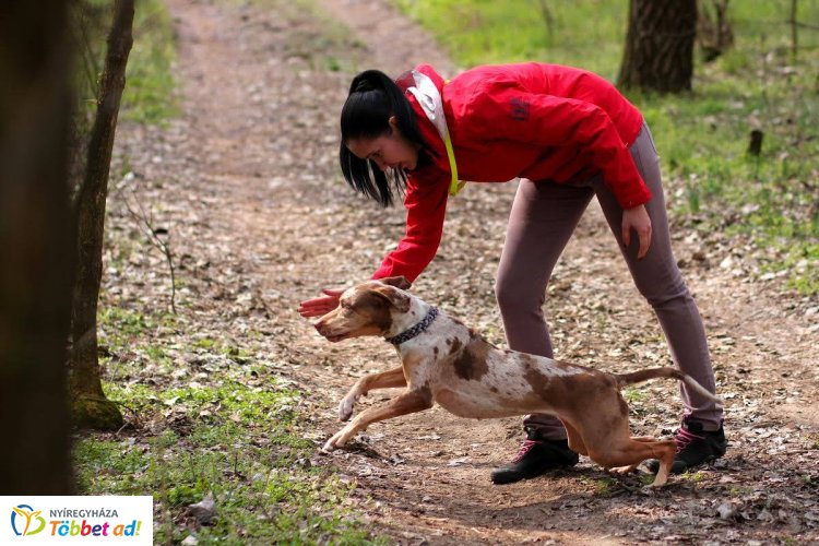 Leopárdkutyák Nyíregyházán! Személykeresés, terület-és romfelderítés Mirzával és Zorával