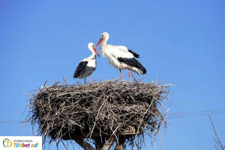 Biztonságban a gólyák! Egyre több a gólyafészektartó térségünkben is