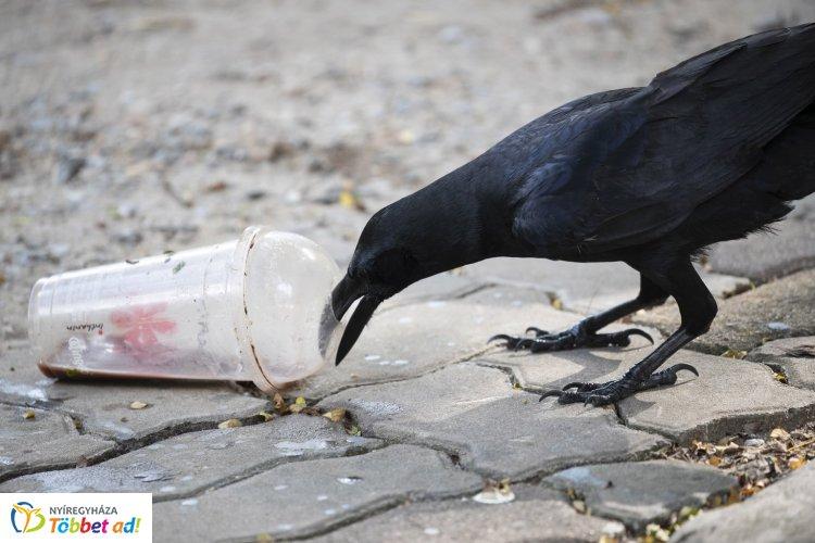 A műanyag evőeszközök, tányérok, szívószálak használatát betiltják