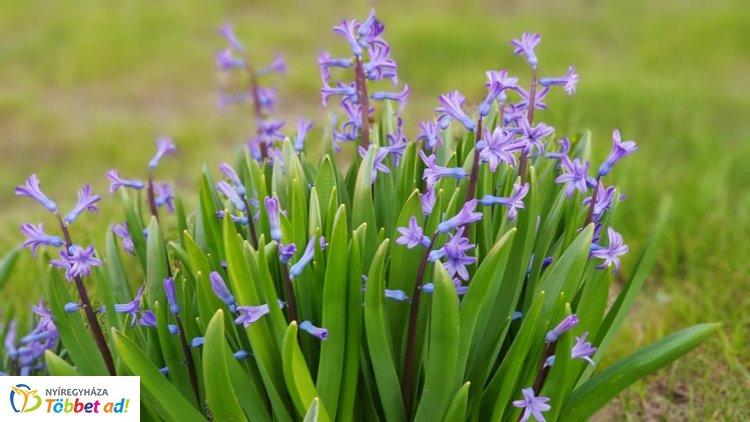 Szemetgyönyörködtető ahogy ébred a természet - Végre süt a nap és virágoznak a virágok
