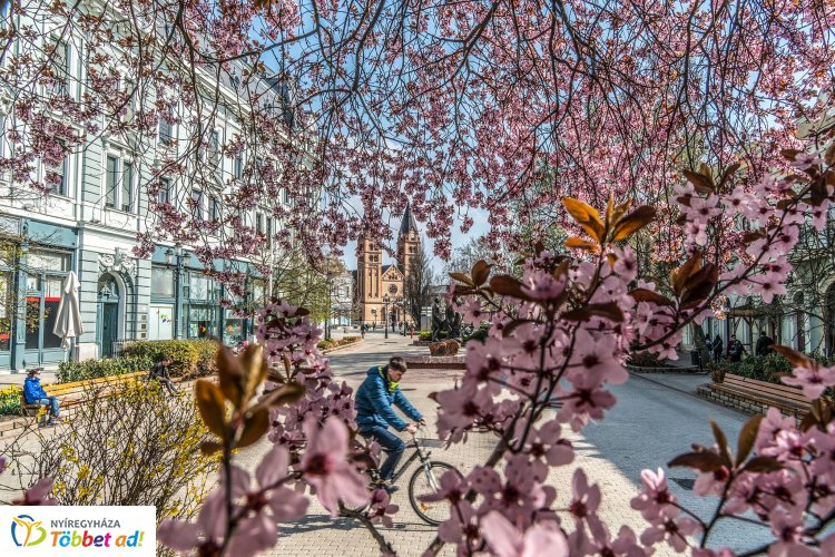 Virágba borult a belváros – Sétáljon egy nagyot Ön is Nyíregyháza főterén!