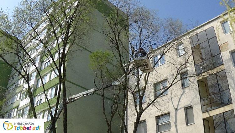 Favágási munkálatokat végeznek a NYÍRVV munkatársai a Kossuth utcán