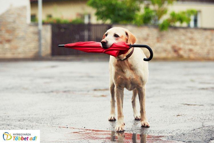 Elő az esőkabátokkal és esernyőkkel! – Szeles, csapadékos idő várható a hétvégén
