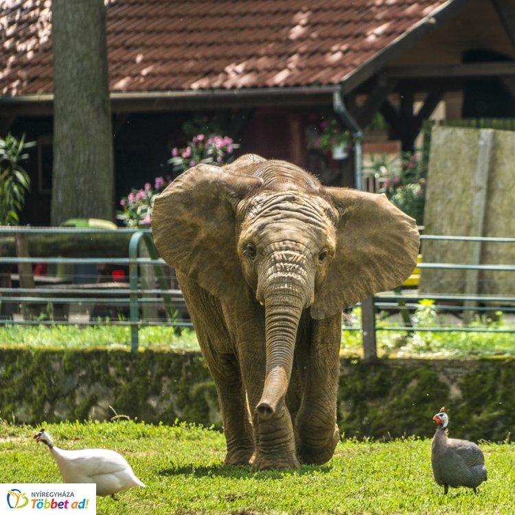 Ezekkel a meglepetésekkel készülnek a Nyíregyházi Állatparkban a látogatóknak!