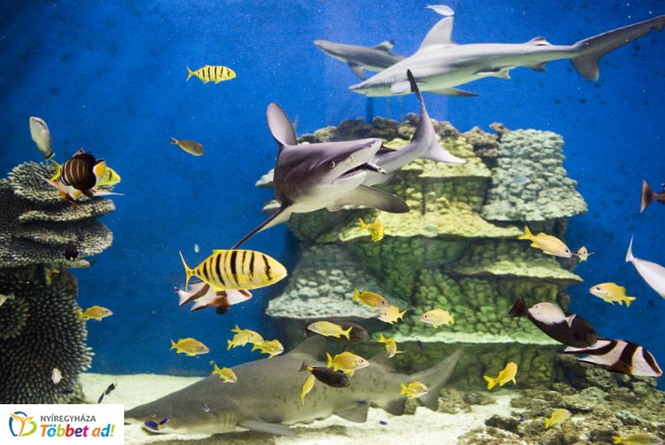Nyíregyházán a világ vezető tengerbiológusai - Cápabefogás is lesz