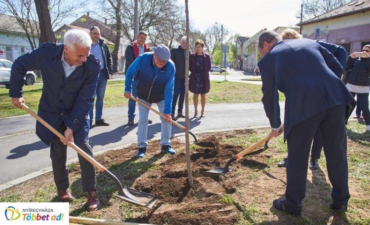 Folytatódik a Nyíregyháza polgármestere által kezdeményezett fásítási program