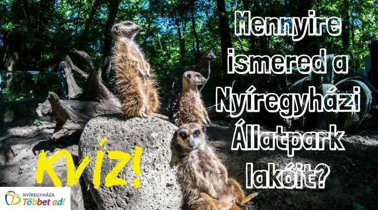 Kvíz! – Mennyire ismered a Nyíregyházi Állatpark lakóit? Most kiderül!