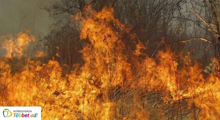 Több mint tíz hektáron égett az erdő aljnövényzete - A szél nem kedvezett az oltásnak