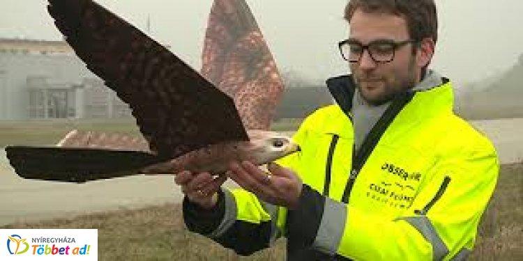 Jönnek a madárdrónok -  Íme a drónok új generációja