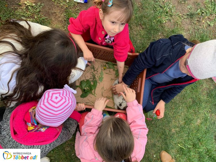 Tojásfát díszítettek Oroson húsvétkor – Nyuszisimogatás is a program része volt