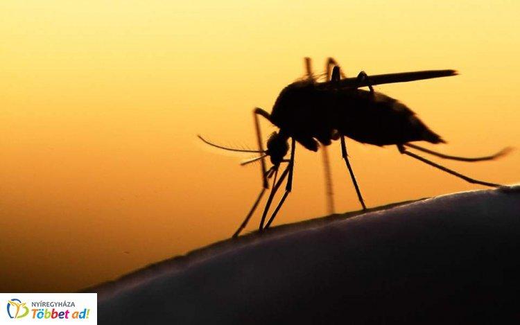 Kezdődik a szúnyogirtás – A héten 2200 hektárnyi vízfelületet kezelnek országszerte