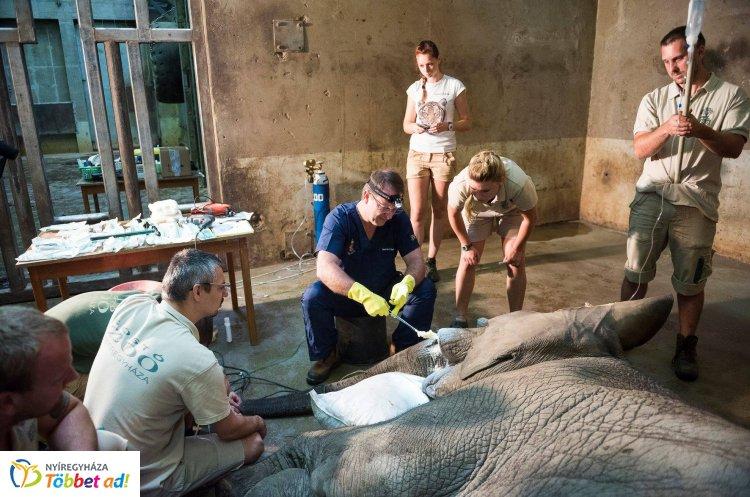 A kulisszák mögött – Így dolgozik a Nyíregyházi Állatpark állatorvosi csapata