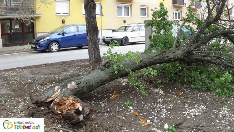 Fát tört egy jármű az Arany János utcán, majd elhagyta a helyszínt
