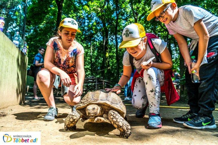 Már csak korlátozott számban tudnak gyermekeket fogadni a Zoo-Suli nyári turnusaiba!