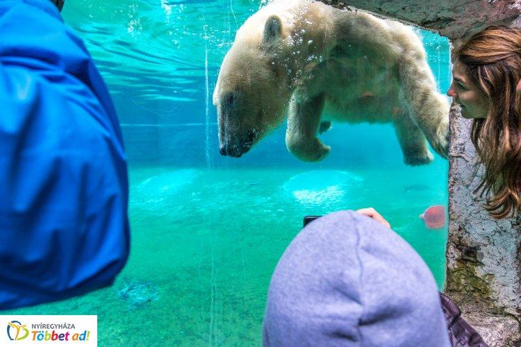 Happy Bears Day – Nagy sikert aratott a Nemzetközi Medve Nap a Nyíregyházi Állatparkban