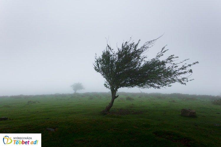 Országszerte viharos szélre figyelmeztet a meteorológiai szolgálat