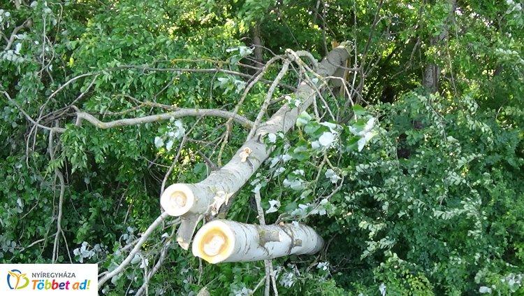 Kedden is adtak munkát bőven a viharos szél okozta károk Szabolcs megyében