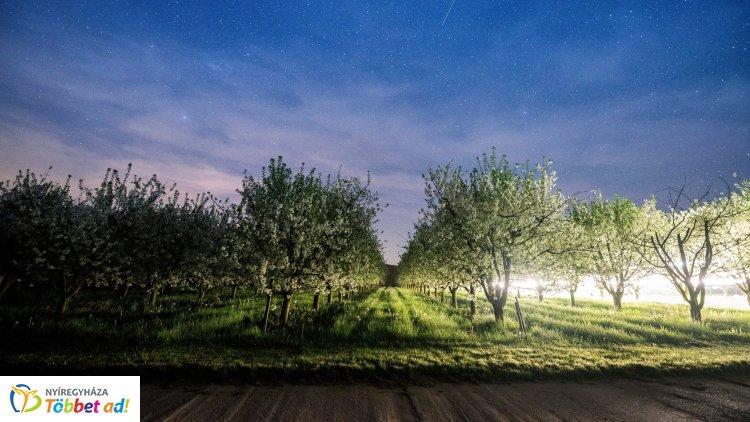Jót tett a csapadékos idő a kertészeteknek és a gyümölcsösöknek