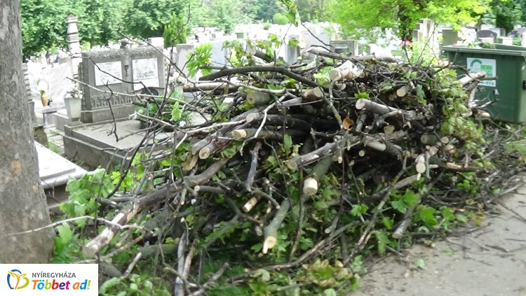 Vágják a balesetveszélyes ágakat és fákat az Északi Temetőben