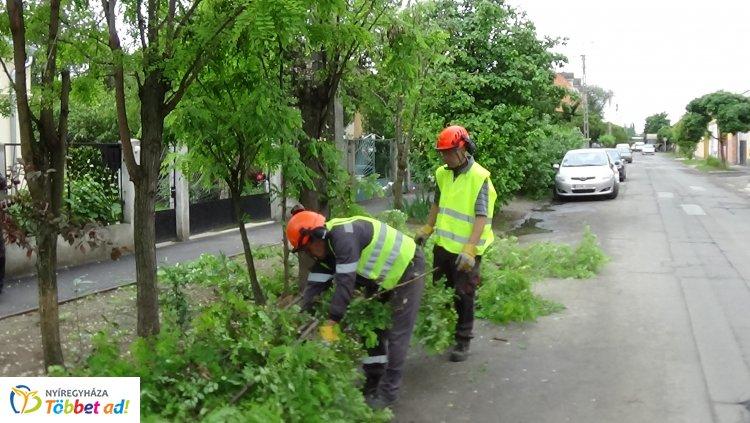 Faápolási munkálatokat végeztek a NYÍRVV szakemberei a Moszkva utcán