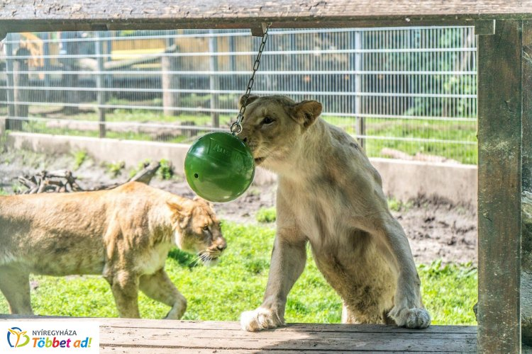 Gyereknapi ajándéközön a Nyíregyházi Állatparkban – Az E.ON és az állatpark együttműködése