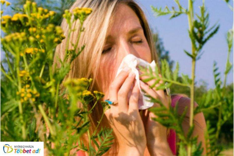 Itt az allergiaszezon - A pázsitfűfélék tüneteket okozhatnak