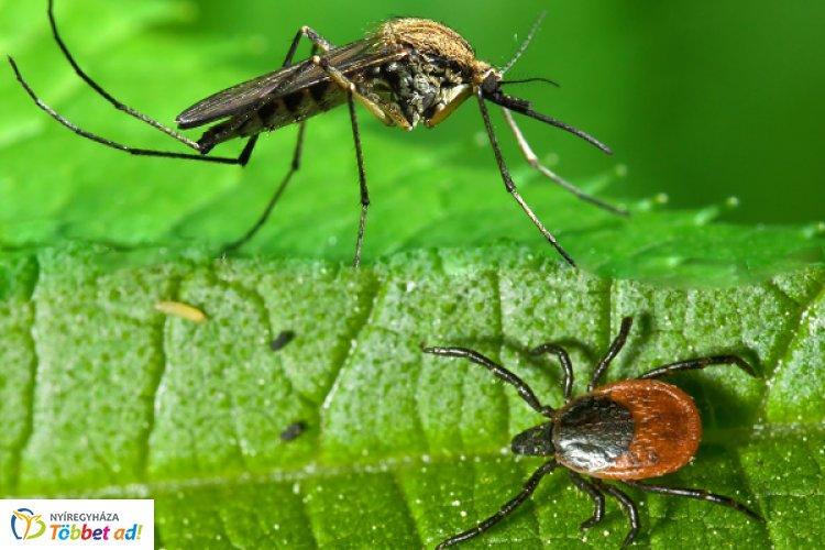 Szúnyogok és kullancsok?! Kiderül, hogyan hatásos a vérszívók elleni védekezés
