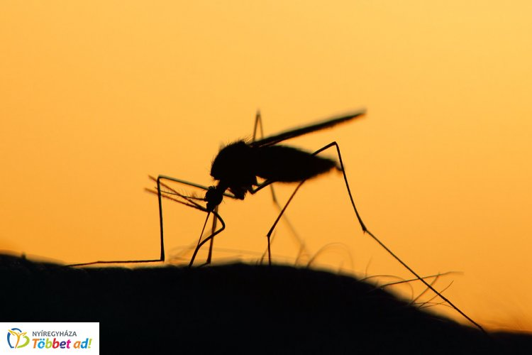 Minden eddiginél nagyobb területen lépnek fel a szúnyogok ellen