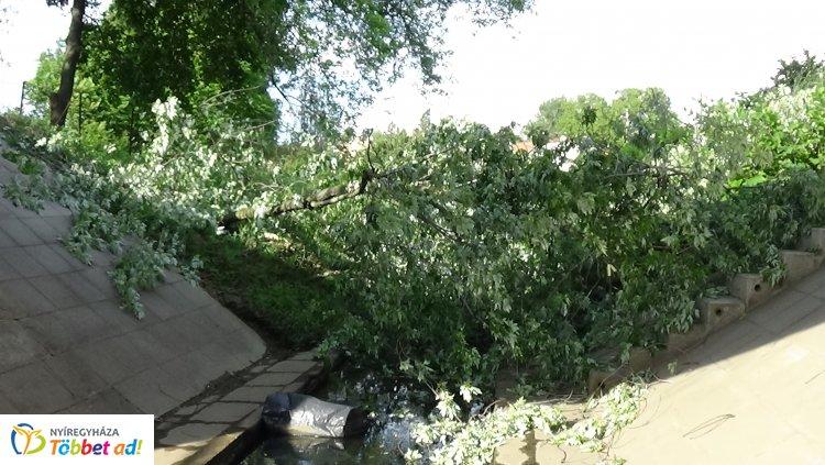 A FETIVIZIG munkatársai érkeztek az Ér-patak medrébe hasadó faág eltávolításához