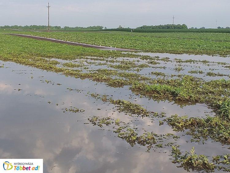 Úsznak a dinnyék Nagycserkeszen! Friss fotók a vihar utáni helyzetről!