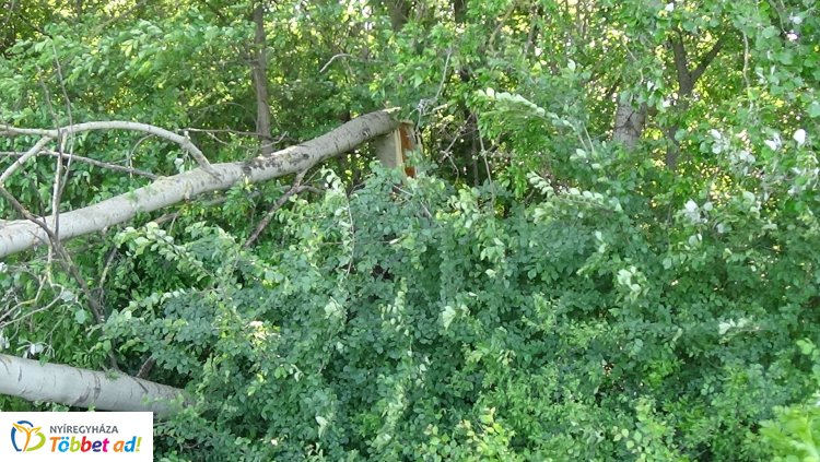 Viharkárok – Még mindig adnak munkát a csütörtöki vihar által okozott károk a megyében