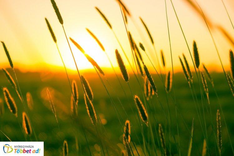 Tovább melegszik az idő július elején – Ilyen időjárásra számíthatunk a héten