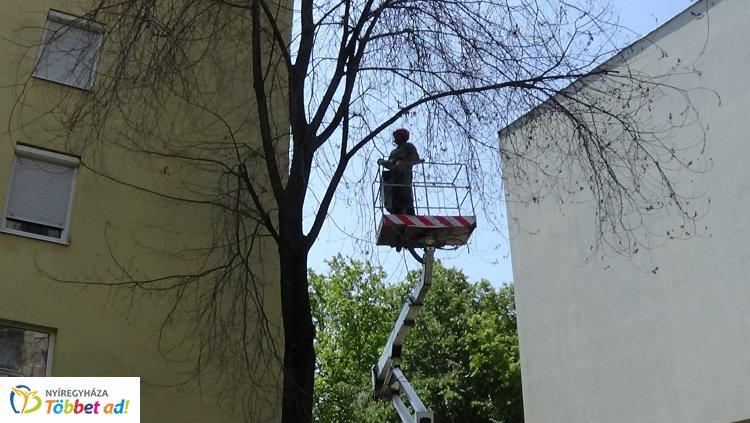 Balesetveszélyes fát vágtak ki a NYÍRVV munkatársai az Etel közben