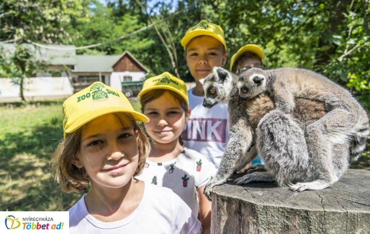 Egy hely, ahonnan minden gyerek felejthetetlen élményekkel távozik! Íme, a Zoo-Suli!