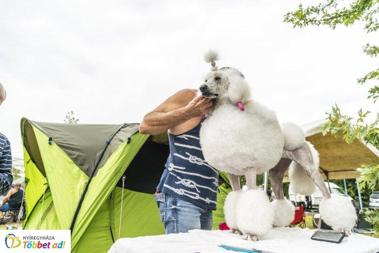 Lenyűgöző kutyatár - Országos kutyakiállítást rendeztek Nyíregyházán